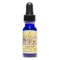 Almond - Calmness of the mind
