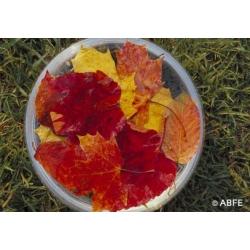 Autumn  Leaves  -  Lâcher-prise