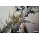 Lichen essence - Changement de vie