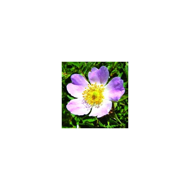 wild rose christian singles Zoosk is a fun simple way to meet wild rose catholic single women online interested meet single catholic women in wild rose christian single women in wild rose.