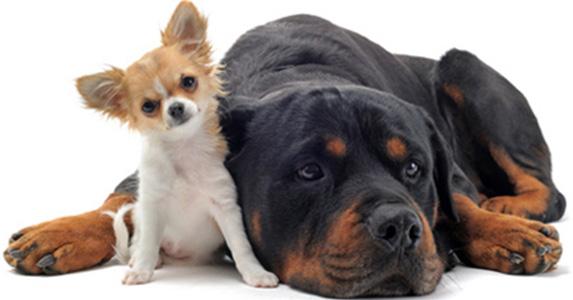 les fleurs de bach pour les chiens conseils en fleurs de bach le blog. Black Bedroom Furniture Sets. Home Design Ideas