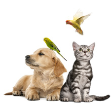 dossier-de-presse-animaux-2016-7
