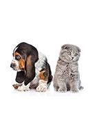 Remèdes naturels contre la tristesse de vos animaux