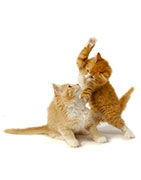 animaux agressifs