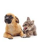 Remèdes naturels pour les animaux peureux et/ou phobiques