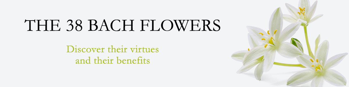 Floral Elixirs And Perfume Bach Flowers Remedies Bach Flowers
